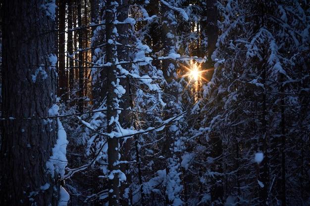 Wieczór w ciemnym lesie, boże narodzenie.