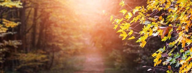 Wieczór w jesiennym lesie. magiczny zakątek jesiennego lasu z kolorowymi liśćmi na drzewach podczas zachodu słońca
