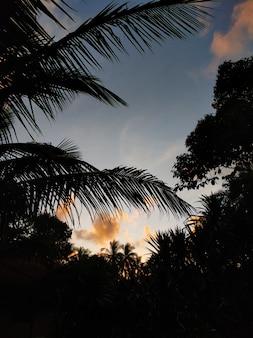 Wieczorne niebo w tropikach z sylwetkami palm i promieniami zachodu słońca.