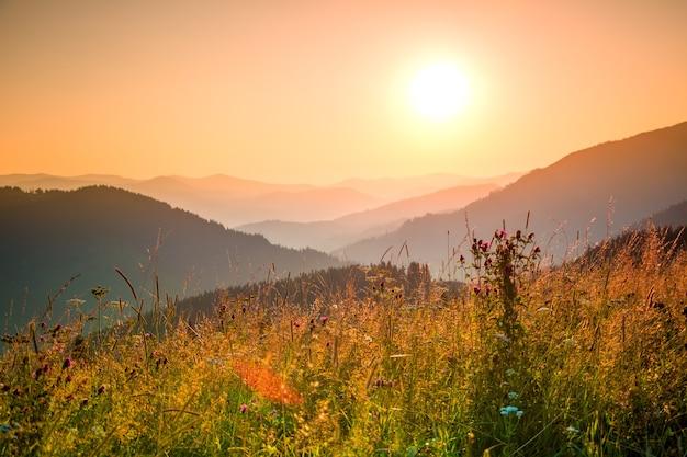 Wieczorne słońce oświetla różne zioła na zboczu góry