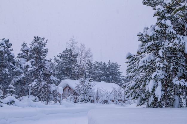 Wieczorny zimowy las. mały dom w głębi. wszystko jest zasypane śniegiem. opad śniegu