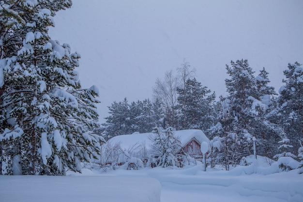 Wieczorny zimowy las. mały dom w głębi. wszystko zasypane śniegiem i pada śnieg