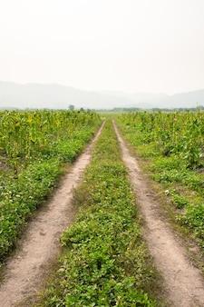 Wiejska droga gruntowa i trawa po obu stronach drogi. ścieżka na polach wiejskich.