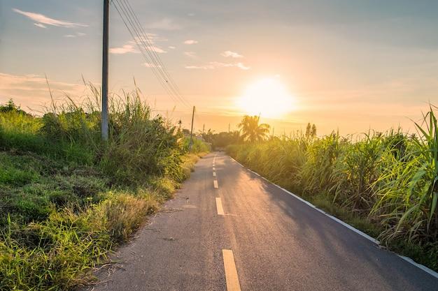 Wiejska droga i trzcina cukrowa przy zmierzchem