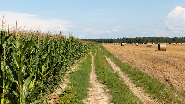 Wiejska droga na polu
