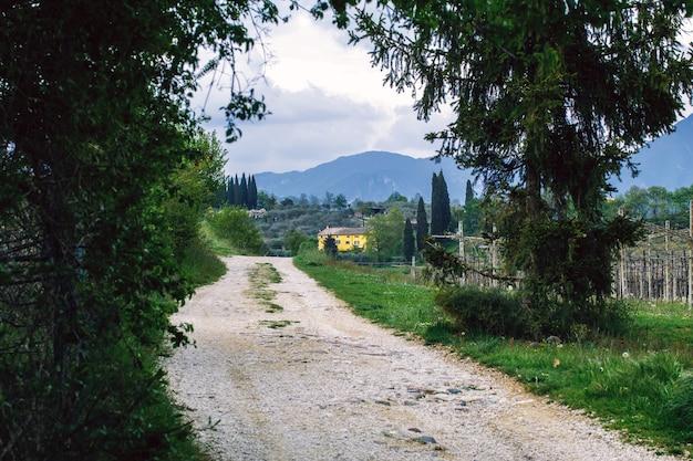Wiejska droga otoczona winnicami bardolino