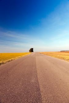 Wiejska droga pokryta warstwami asfaltu różni się w okresie letnim. i rosnące drzewo o zielonych liściach.