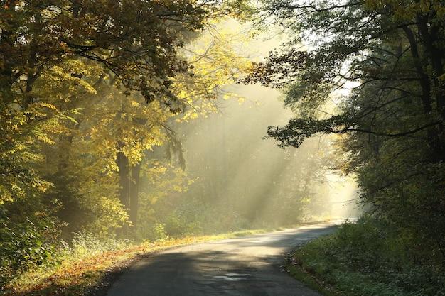 Wiejska droga przez las jesienią o świcie