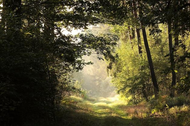 Wiejska droga przez las o wschodzie słońca