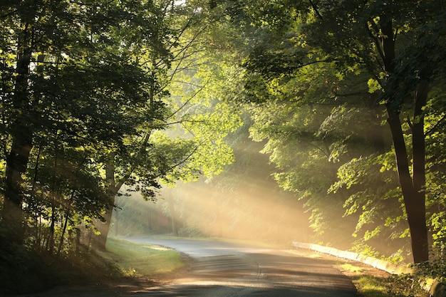 Wiejska droga przez las wiosną w mglisty poranek