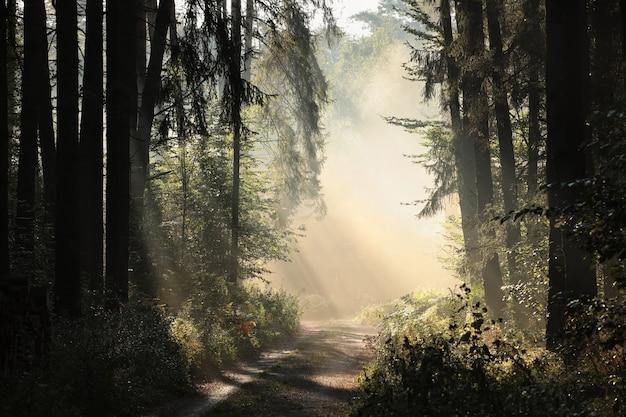 Wiejska droga przez lasy w mglisty jesienny poranek