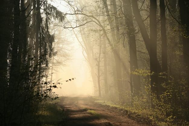 Wiejska droga przez mglisty las podczas wschodu słońca