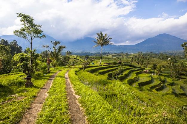 Wiejska droga przy ryżowymi polami jatiluwih w południowo-wschodni bali