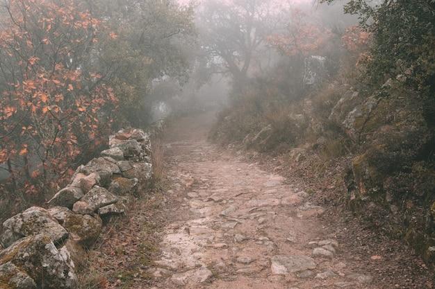 Wiejska droga spowita mgłą w pobliżu montanchez. hiszpania.