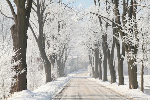 Wiejska droga wśród oszronionych drzew w słoneczny zimowy poranek