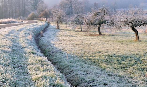 Wiejska linia granicząca z sadem pokrytym szronem