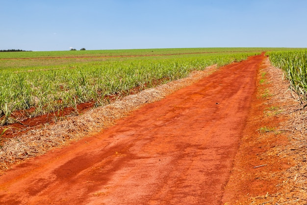 Wiejska pomarańczowa droga gruntowa na plantacji trzciny cukrowej z błękitnym niebem i dalekim horyzontem
