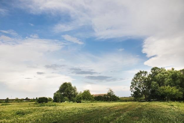 Wiejska przyroda z pięknym niebieskim niebem.