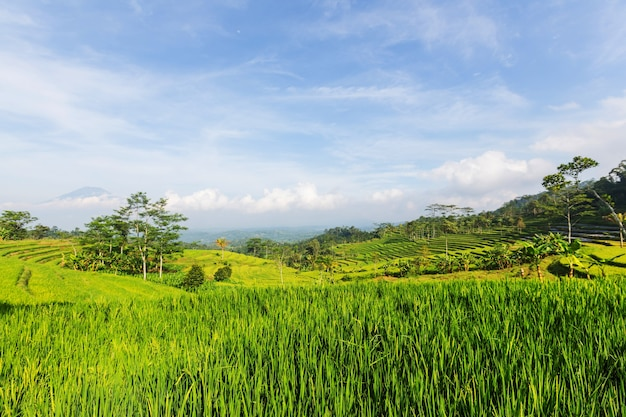 Wiejska sceneria- zielone pola o poranku
