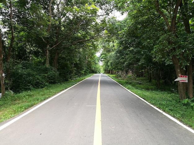 Wiejska ulica z zielonym drzewem. droga naturalna.