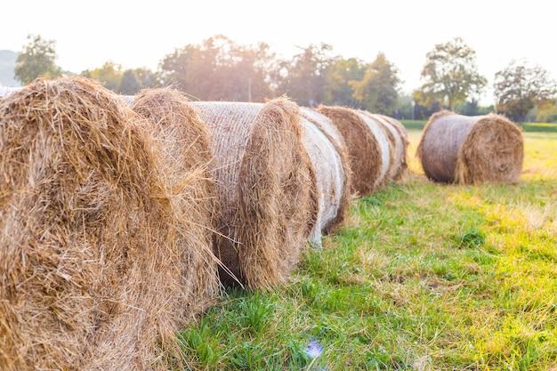 Wiejski krajobraz polna łąka z belami siana po zbiorach. bele rolki siana na polu wsi. piękny krajobraz. koniec lata.