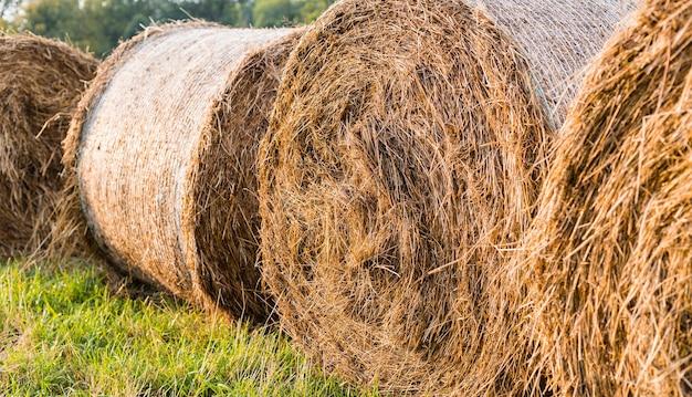 Wiejski krajobraz polna łąka z belami siana po zbiorach. bele rolki siana na polu wsi. piękny krajobraz. pole rolne.