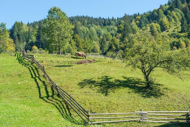 Wiejski krajobraz z krową na zielonych wzgórzach