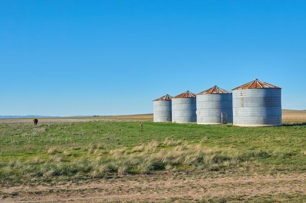 Wiejski krajobraz z silosami z trawą, błękitnym niebem i małą krową patrzącą na horyzont