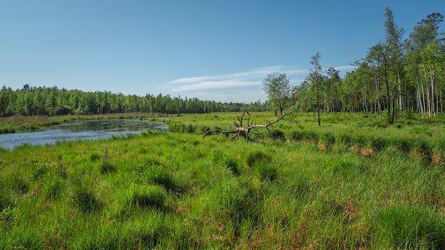 Wiejski krajobraz z wodami powodziowymi, trawą łąkową, kępą bagienną z trawą wypukłą