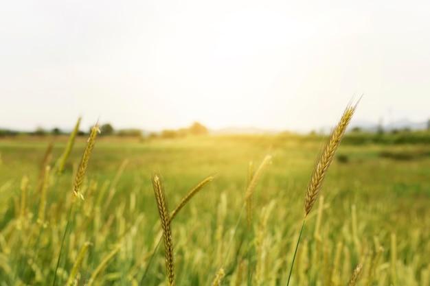 Wiejski krajobraz z zielonym polem