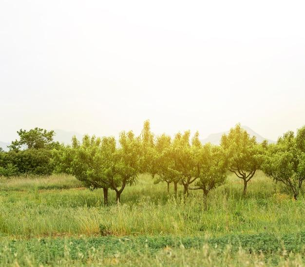 Wiejski krajobraz z zielonymi drzewami