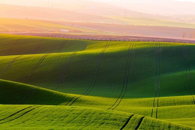 Wiejski wiosny rolnictwa tekstury tło. wzgórza zielonych fal na morawach południowych.
