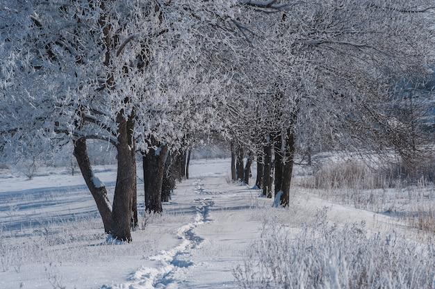 Wiejski zimowy krajobraz z chodnikiem w śniegu
