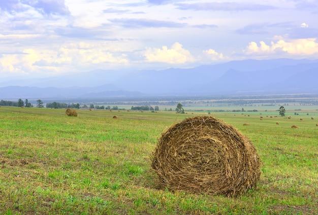 Wiejskie pole w lecie pod błękitnym niebem w górach ałtaju. syberia, rosja