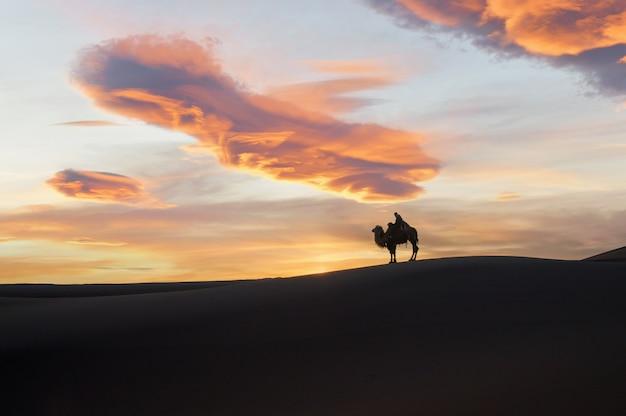Wielbłąd idący przez wydmy o wschodzie słońca, pustynia gobi mongolia