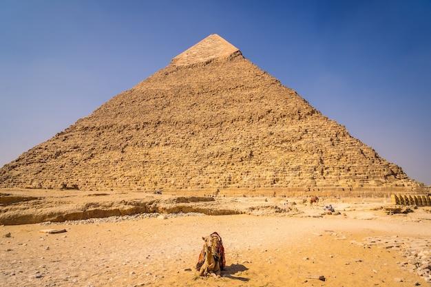 Wielbłąd siedzący na piramidzie chefrena. piramidy w gizie to najstarszy pomnik grobowy na świecie. w mieście kair w egipcie