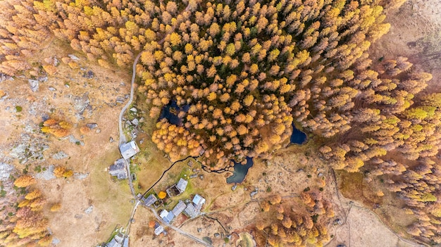 Wiele drzew jesienią widzianych z góry z małym stawem i rzeką w małej wiosce w alpach