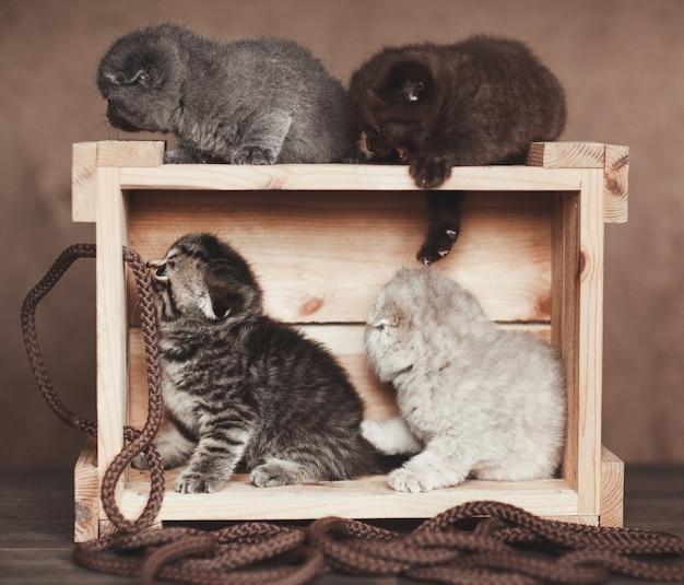 Wiele kociąt bawi się na drewnianym pudełku