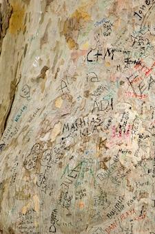 Wiele kolorowych graffiti na starym drzewie