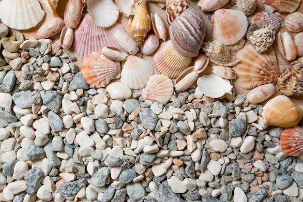 Wiele kolorowych muszelek leżących na kamykach nad brzegiem morza