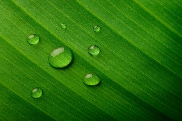 Wiele kropli wody spada na liście bananowca
