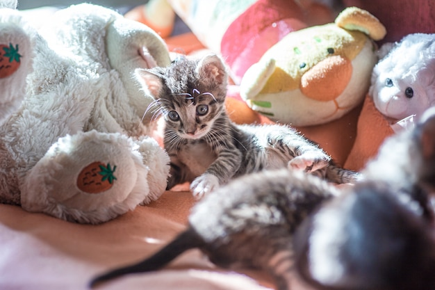 Wiele małych kociąt bawi się na łóżku