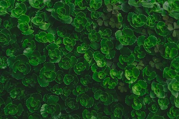 Wiele małych kwiatów jako tło i tekstura.