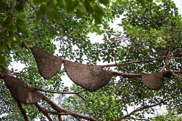 Wiele o strukturze plastra miodu na drzewie