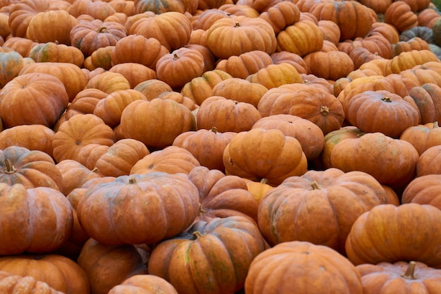 Wiele pomarańczowych dyń czeka na sprzedaż na rynku warzyw