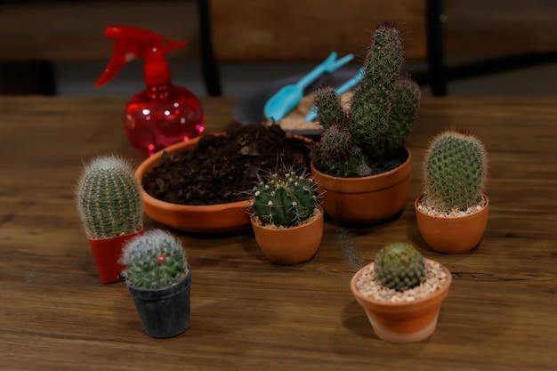 Wiele rodzajów i rozmiarów kaktusów oraz ziemi i narzędzi ogrodniczych do dekoracji domu w ogrodzie.