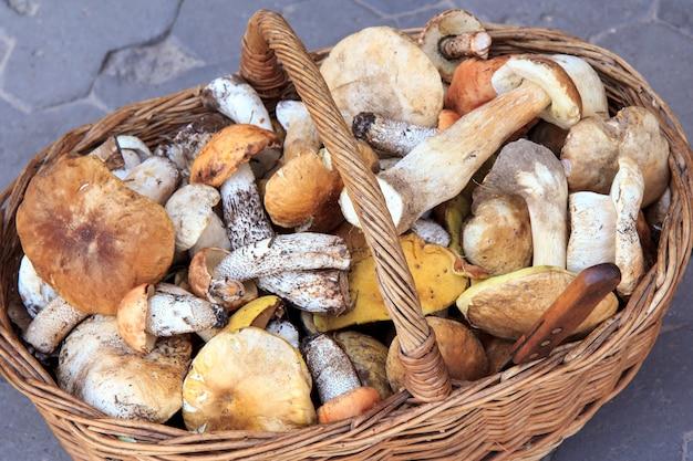 Wiele różnych grzybów w wiklinowym koszu i leżący nóż ze stali nierdzewnej. właśnie zebrane grzyby. grzyby leśne