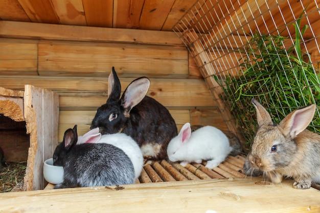 Wiele różnych małych karmionych królików na fermie zwierząt w hutch-hutch