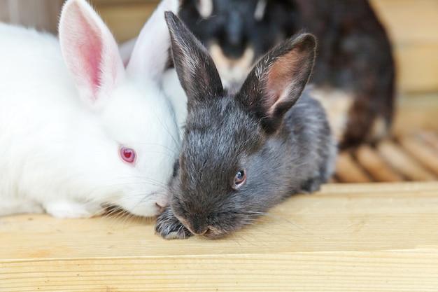 Wiele różnych małych królików karmionych na farmie zwierząt w klatce dla królików, na tle stodoły