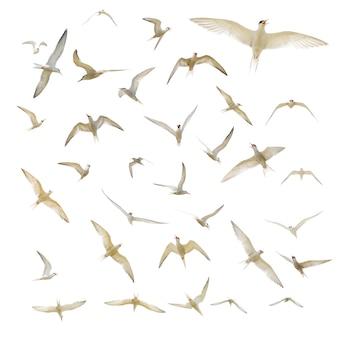 Wiele seagulls izolowane